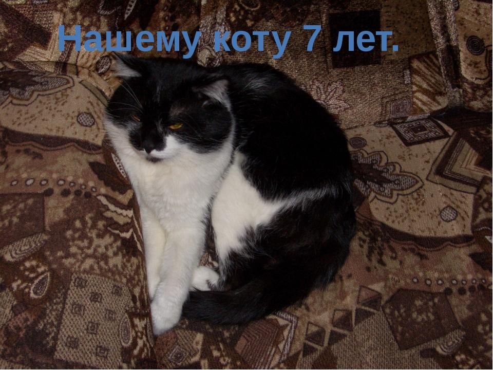 Нашему коту 7 лет.