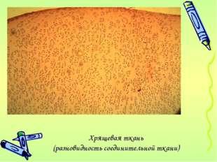 Хрящевая ткань (разновидность соединительной ткани)