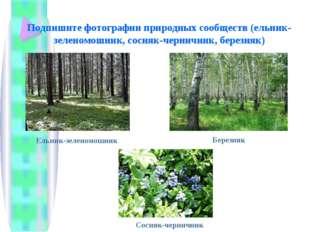 Подпишите фотографии природных сообществ (ельник-зеленомошник, сосняк-черничн