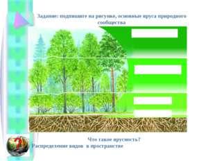 Задание: подпишите на рисунке, основные яруса природного сообщества Что такое