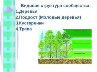 Видовая структура сообщества: Деревья Подрост (Молодые деревья) Кустарники Тр