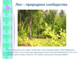 Лес – природное сообщество Все обитатели в лесу живут совместно, тесно связан