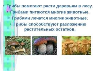 Грибы помогают расти деревьям в лесу. Грибами питаются многие животные. Гриба