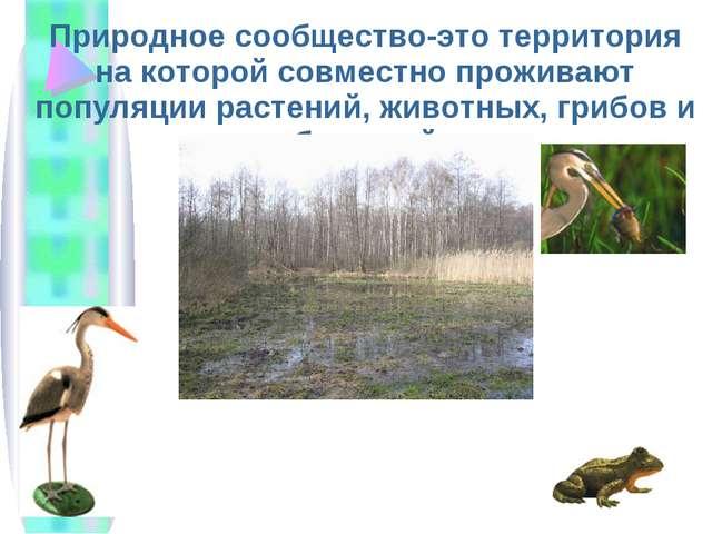 Природное сообщество-это территория на которой совместно проживают популяции...