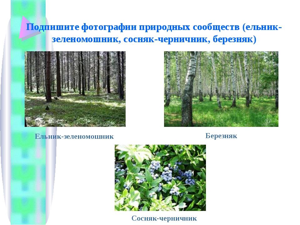 Подпишите фотографии природных сообществ (ельник-зеленомошник, сосняк-черничн...