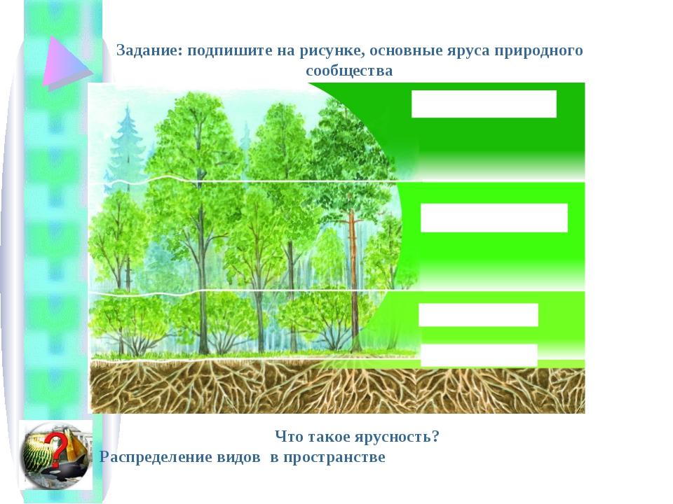 Задание: подпишите на рисунке, основные яруса природного сообщества Что такое...