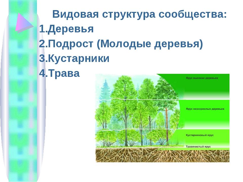 Видовая структура сообщества: Деревья Подрост (Молодые деревья) Кустарники Тр...