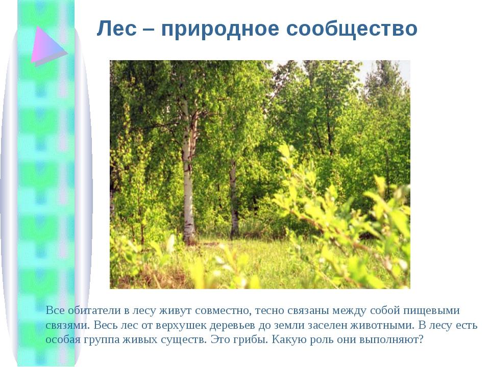 Лес – природное сообщество Все обитатели в лесу живут совместно, тесно связан...