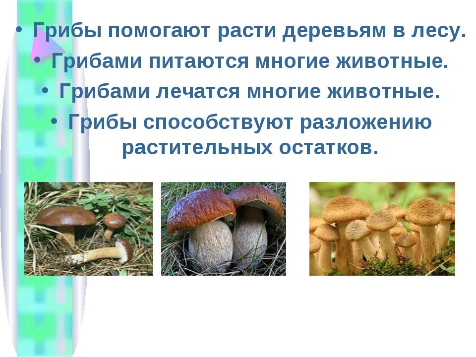 Грибы помогают расти деревьям в лесу. Грибами питаются многие животные. Гриба...