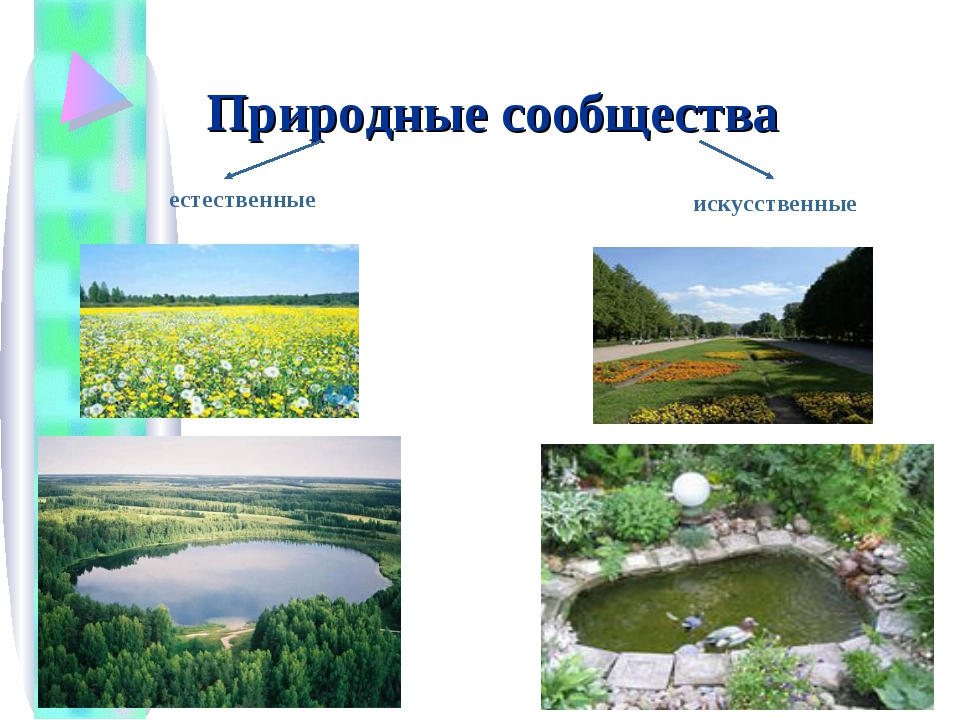 Природные сообщества естественные искусственные