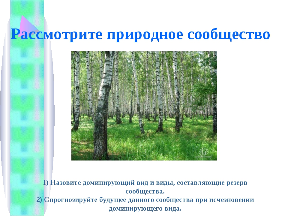 Рассмотрите природное сообщество 1) Назовите доминирующий вид и виды, составл...