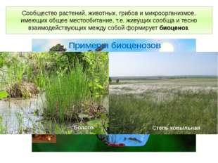 Сообщество растений, животных, грибов и микроорганизмов, имеющих общее местоо