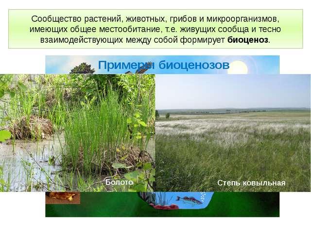 Сообщество растений, животных, грибов и микроорганизмов, имеющих общее местоо...