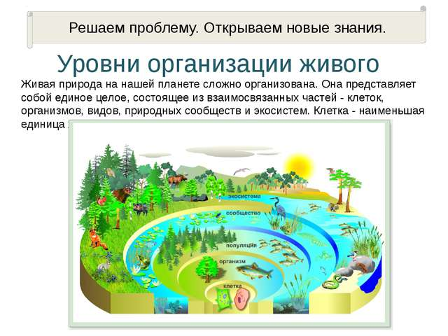 Уровни организации живого Живая природа на нашей планете сложно организована....