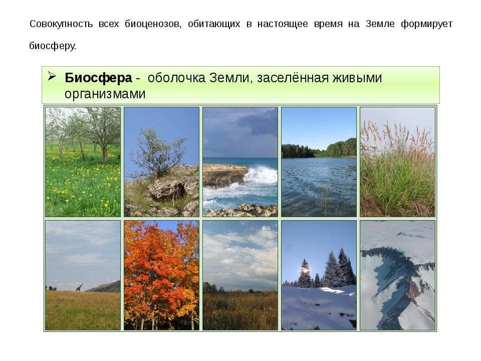 Совокупность всех биоценозов, обитающих в настоящее время на Земле формирует...