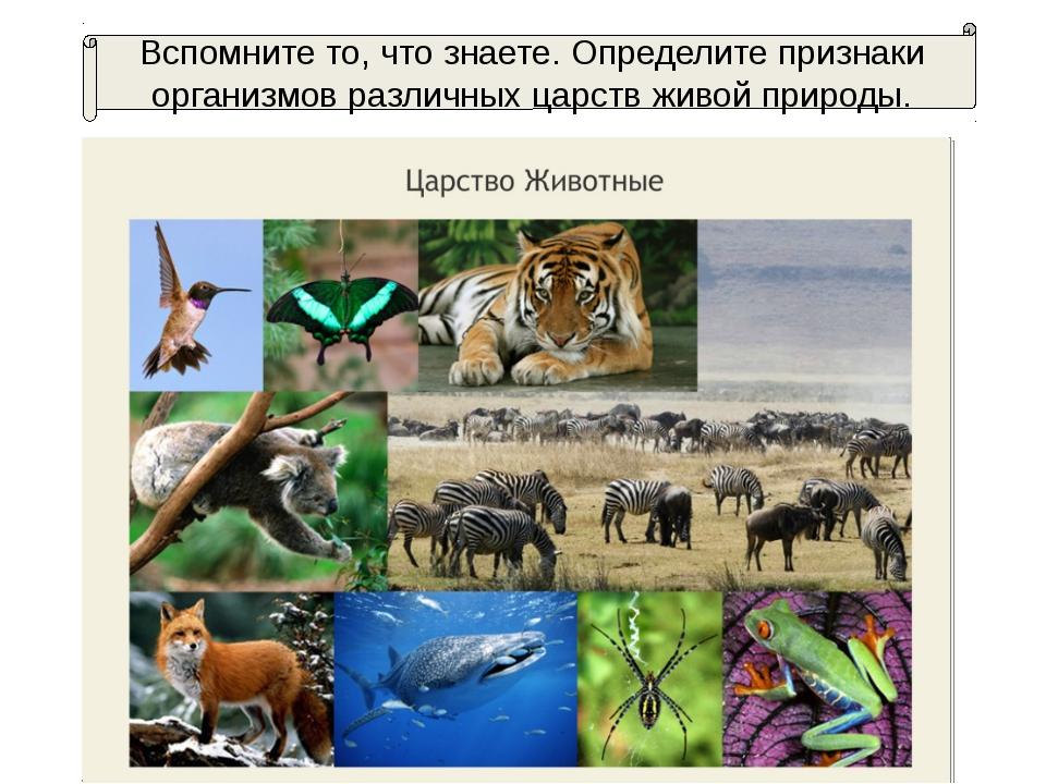 Вспомните то, что знаете. Определите признаки организмов различных царств жив...