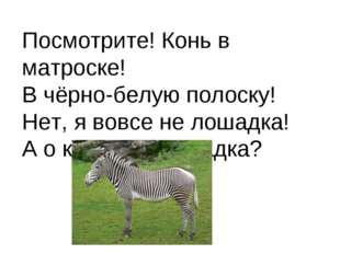 Посмотрите! Конь в матроске! В чёрно-белую полоску! Нет, я вовсе не лошадка!