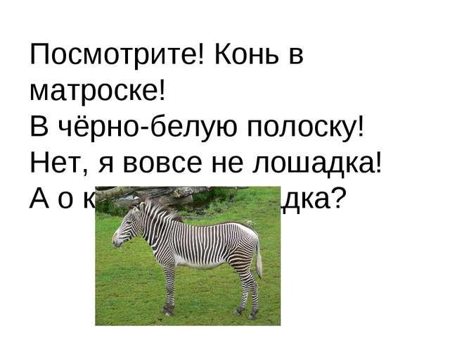 Посмотрите! Конь в матроске! В чёрно-белую полоску! Нет, я вовсе не лошадка!...