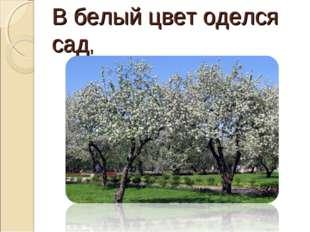 В белый цвет оделся сад,