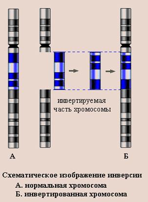 http://www.pedklin.ru/VPR/images/mut5.jpg