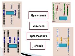 Дупликация Инверсия Транслокация Делеция