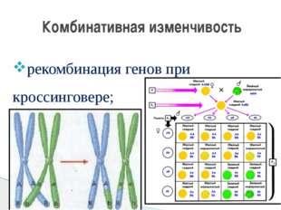 рекомбинация генов при кроссинговере; Комбинативная изменчивость