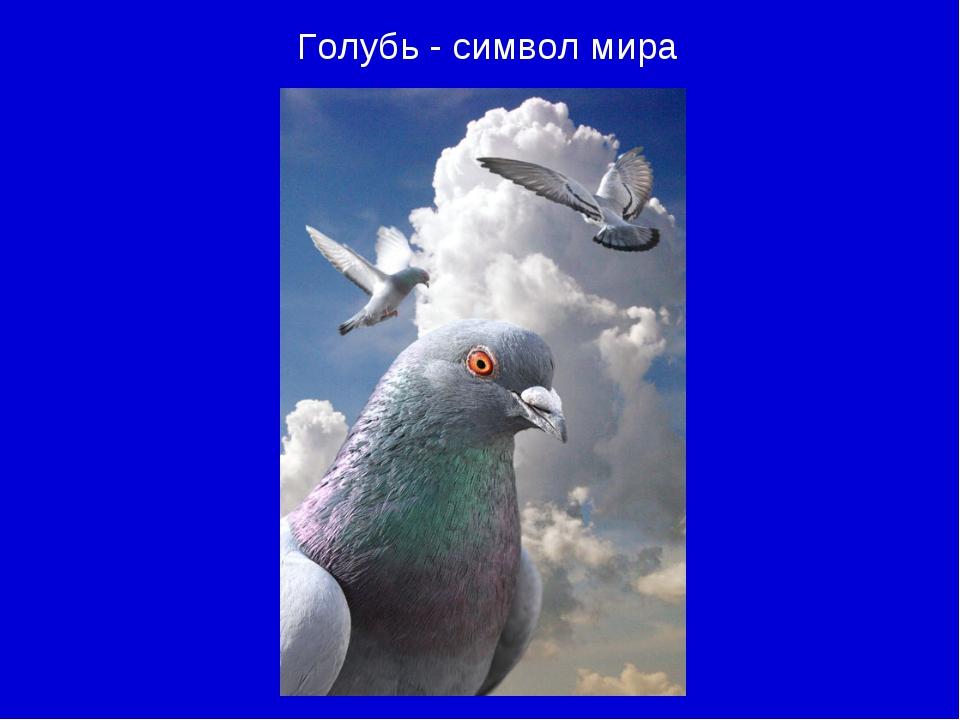 Голубь - символ мира