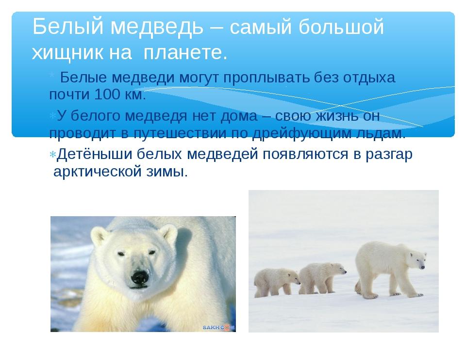 * Белые медведи могут проплывать без отдыха почти 100 км. У белого медведя не...