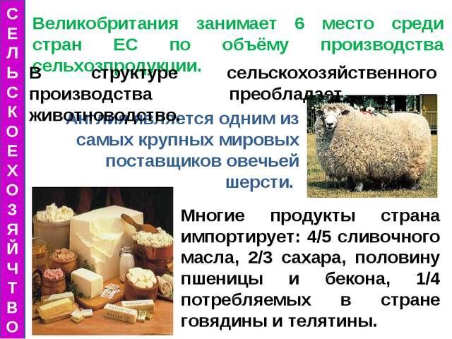 Англия является одним из самых крупных мировых поставщиков овечьей шерсти. Ве...