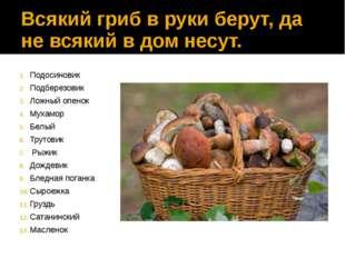 Всякий гриб в руки берут, да не всякий в дом несут. Подосиновик Подберезовик