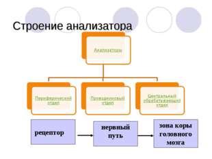 Строение анализатора