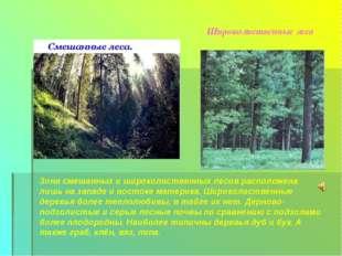 Широколиственные леса Зона смешанных и широколиственных лесов расположена лиш