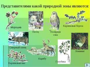Карликовая береза Карликовая ива Голубика Представителями какой природной зон