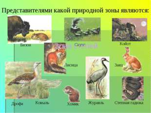 Бизон Представителями какой природной зоны являются: Койот Дрофа Ковыль Степн