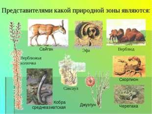 Представителями какой природной зоны являются: Верблюд Саксаул Эфа Верблюжья