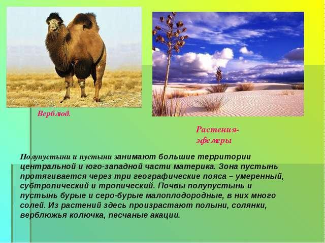 Верблюд. Растения-эфемеры Полупустыни и пустыни занимают большие территории ц...