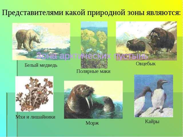 Представителями какой природной зоны являются: Овцебык Белый медведь Мхи и ли...
