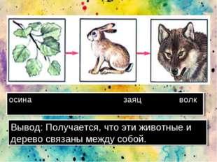 осина заяц волк Вывод: Получается, что эти животные и дерево связаны между со