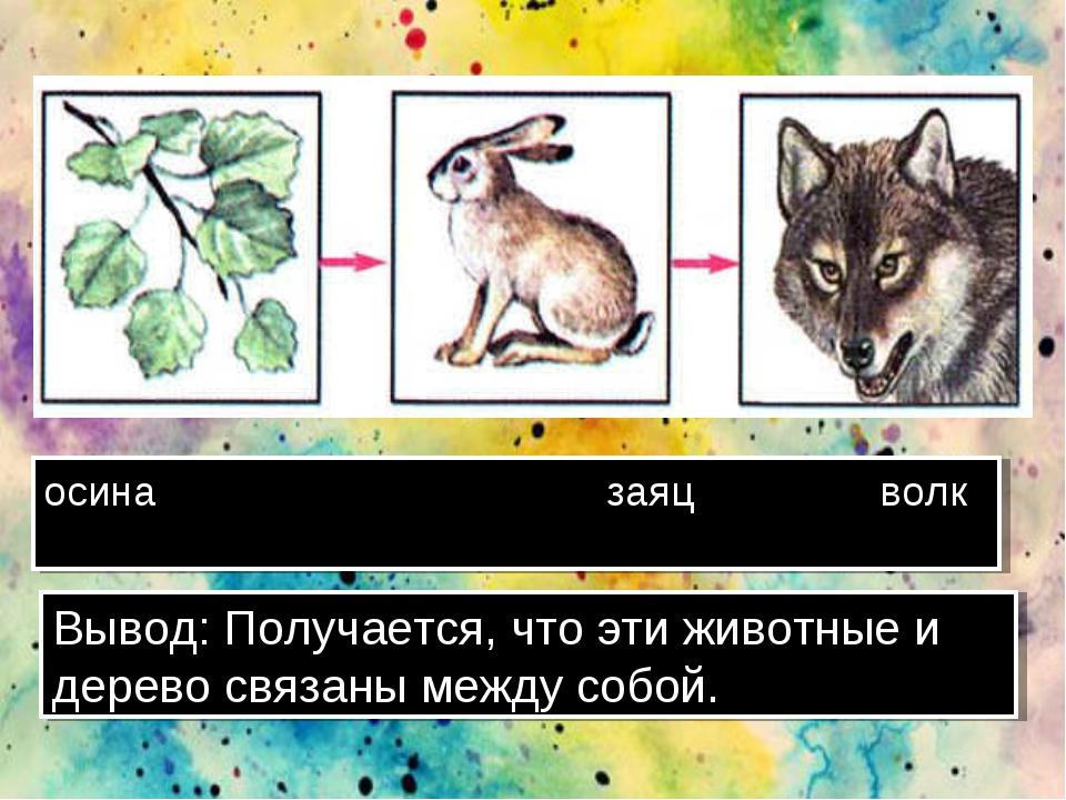 осина заяц волк Вывод: Получается, что эти животные и дерево связаны между со...