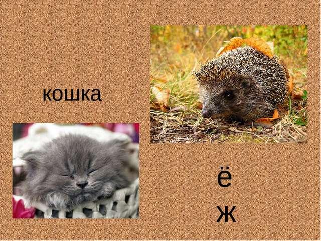 ёж кошка