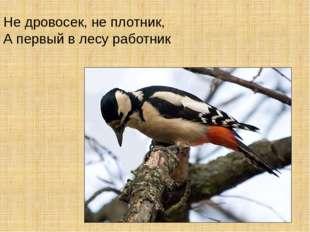 Не дровосек, не плотник, А первый в лесу работник