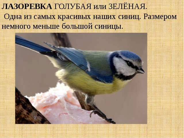 ЛАЗОРЕВКА ГОЛУБАЯ или ЗЕЛЁНАЯ. Одна из самых красивых наших синиц. Размером н...