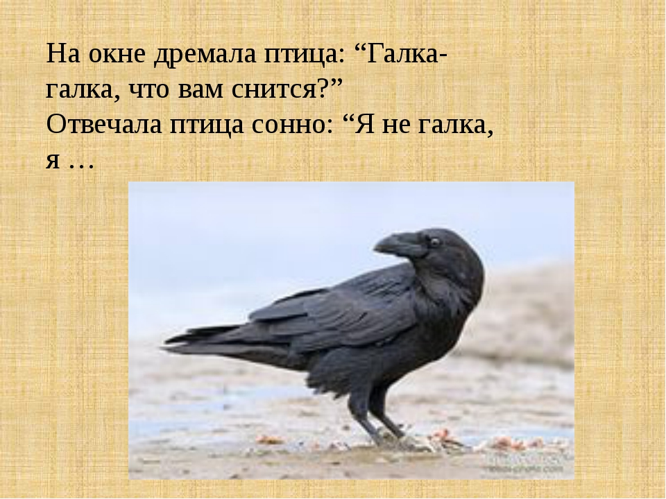 """На окне дремала птица: """"Галка-галка, что вам снится?"""" Отвечала птица сонно: """"..."""