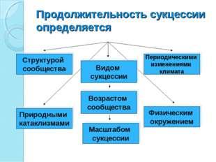 Продолжительность сукцессии определяется Структурой сообщества Видом сукцесси