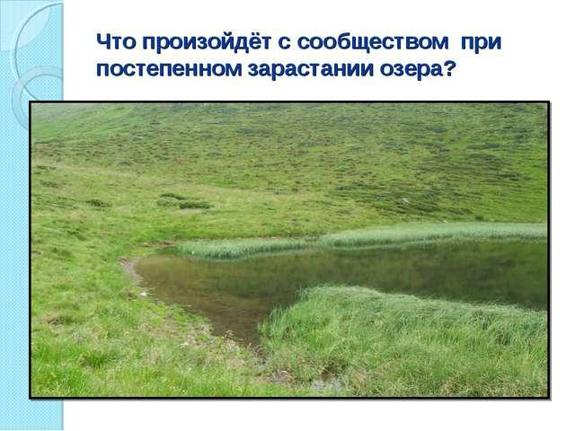 Что произойдёт с сообществом при постепенном зарастании озера?