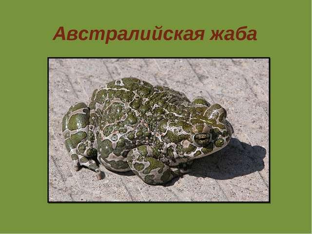 Австралийская жаба