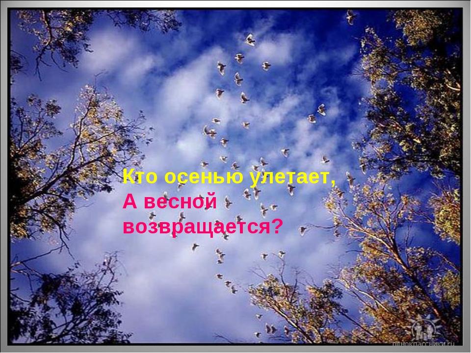 Кто осенью улетает, А весной возвращается?