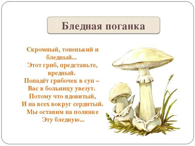 Скромный, тоненький и бледный... Этот гриб, представьте, вредный. Попадёт гри...