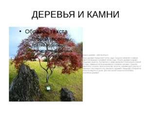 ДЕРЕВЬЯ И КАМНИ У каждого дерева – своя функция. Крупные деревья определяют