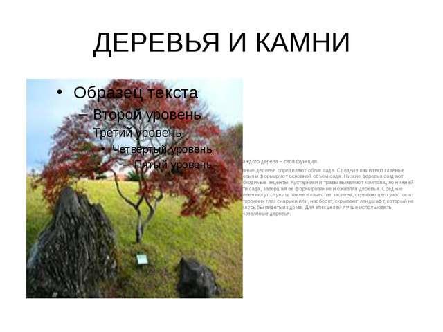 ДЕРЕВЬЯ И КАМНИ У каждого дерева – своя функция. Крупные деревья определяют...